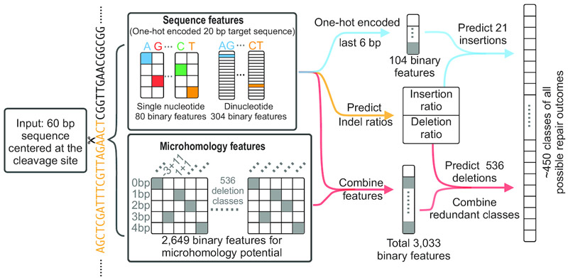 Machine learning for predicting gene editing outcomes