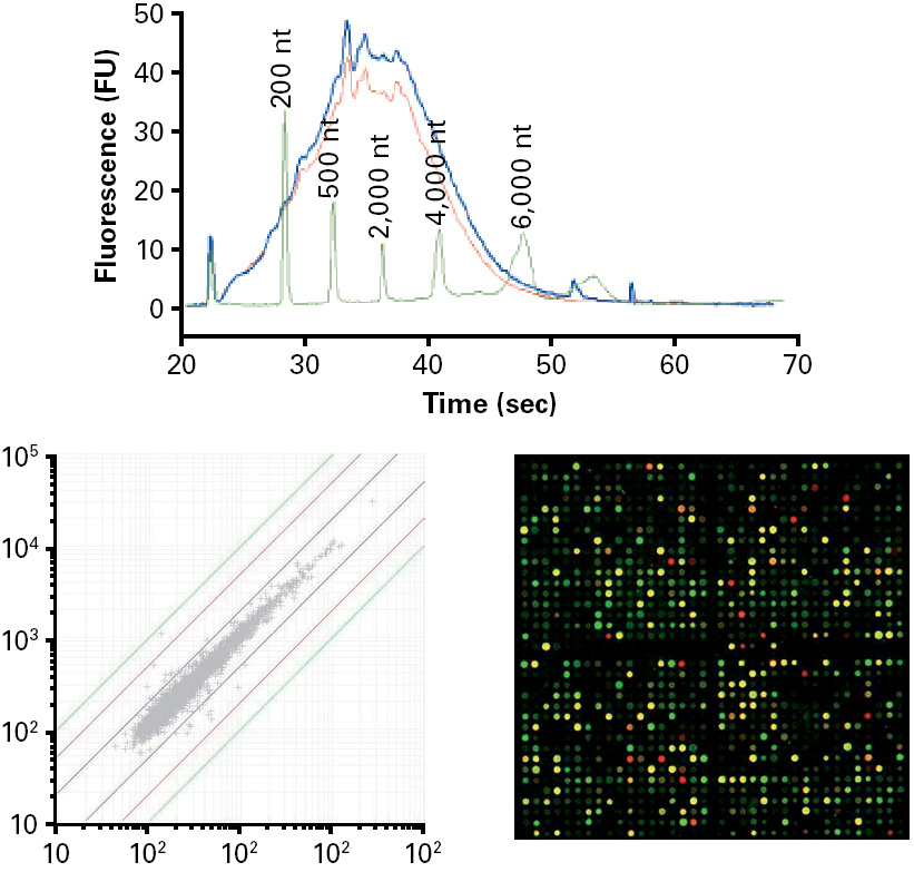 Mn 740609 250 Nucleospin Gel And Pcr Clean Up 250 Preps: NucleoSpin RNA Clean-up