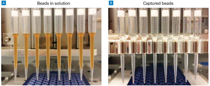 In-tip bead separation maximizes reproducibility.