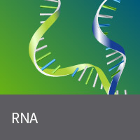 Purified total RNA and mRNA