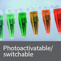 Photoactivatable/switchable fluorescent protein