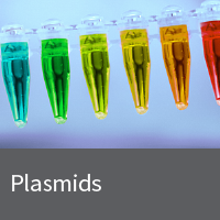 Choice of fluorescent protein plasmids