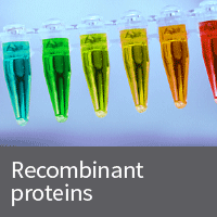 Recombinant protein
