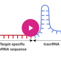 video showing how to design guide RNAs