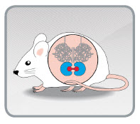 iDimerize inducible protein dimerization in vivo in trangenic mice