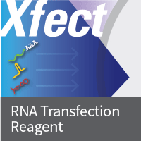 Xfect RNA Transfection Reagent