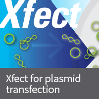 High transfection efficiency and a simple protocol