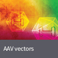 AAV systems for the preparation of high titer AAV particles without the use of a helper virus
