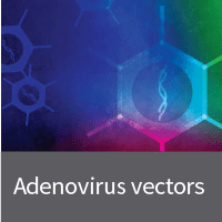Tetracycline inducible adenovirus system