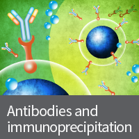 Antibodies and immunoprecipitation products