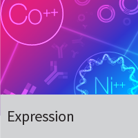 Recombinant protein expression: Brevibacillus Expression