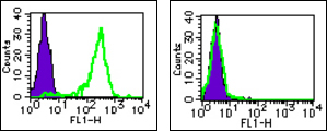 Flow cytometry analysis using Anti-Human RGMa (410-10) Mouse IgG MoAb