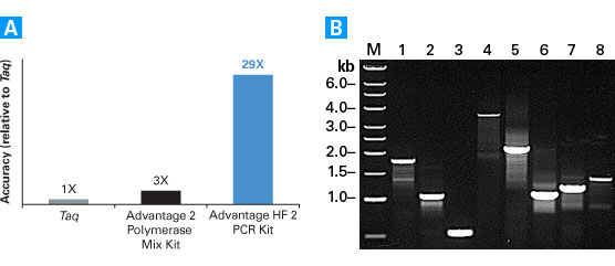 Amplification with the Advantage HF 2 PCR Kit