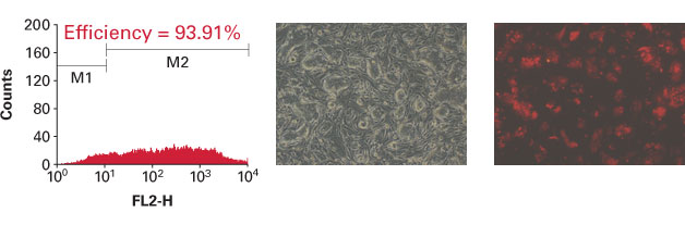 Effective transfection of embryonic stem cells with Xfect mESC Transfection Reagent