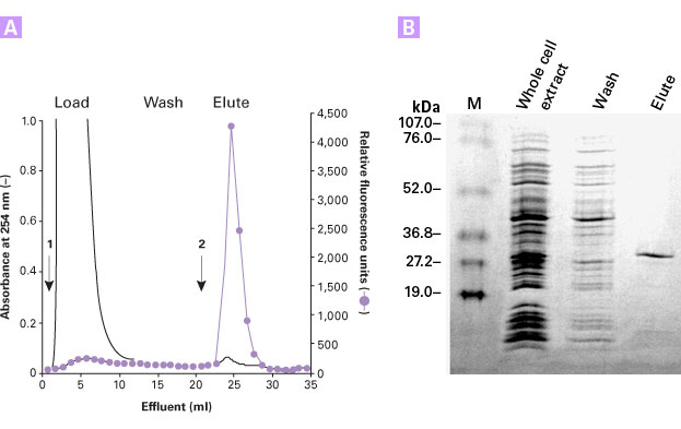 FPLC purification of HAT-tagged protein with TALON Superflow