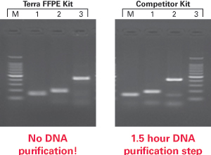 Faster DNA amplification with the Terra PCR Direct FFPE Kit