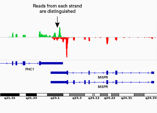 Indexed cDNA libraries were prepared according to the SMARTer Stranded RNA-Seq Kit protocol using twelve indices, and sequenced on an Illumina HiSeq Platform with 2 x 100 bp paired end reads