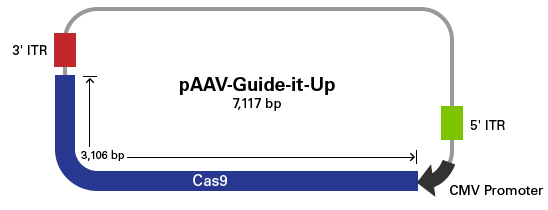 Vector map of pAAV-Guide-it-Up