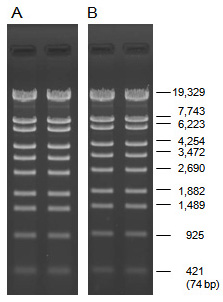 Analysis of a restriction digest using PrimeGel Agarose LE 1–20K and PrimeGel Agarose LE 1–20K GAT