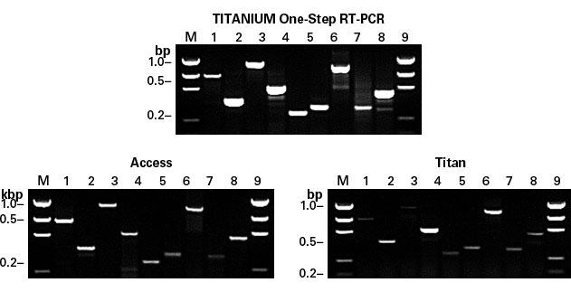 Titanium One-Step RT-PCR Kit