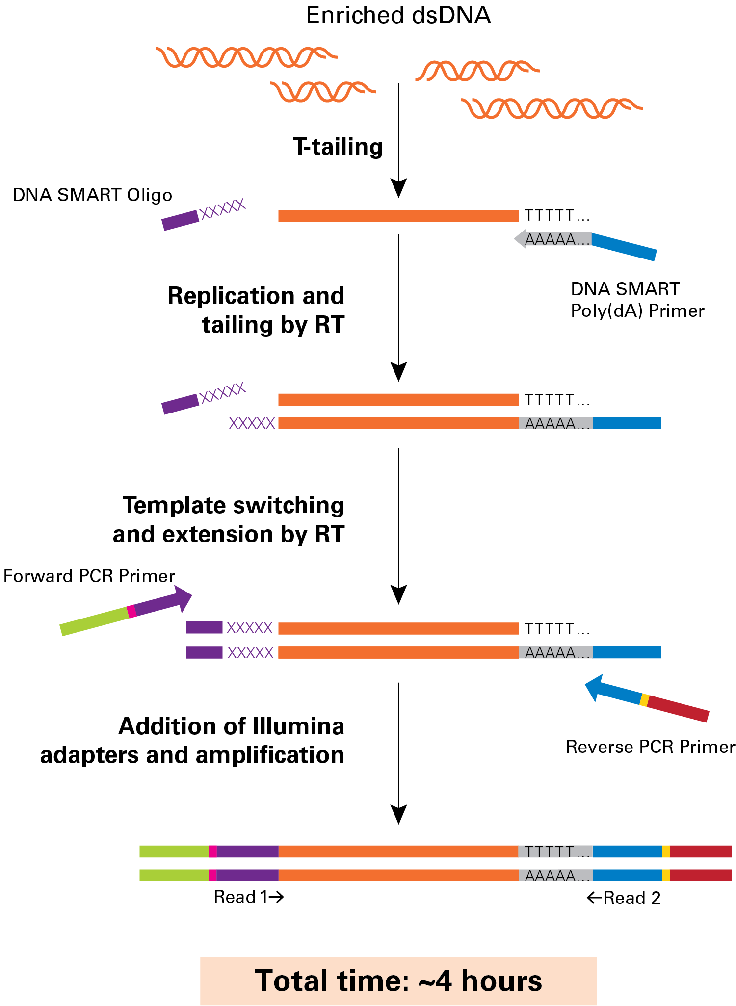 Flowchart for DNA-SMART ChIP-Seq technology