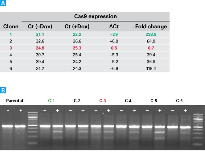 Lenti-X Tet-On 3G CRISPR-Cas9 System