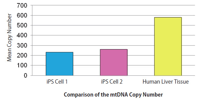Comparison of mtDNA copy number in two iPSC lines and human hepatic tissue