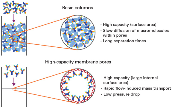 Capturem Protein A technology