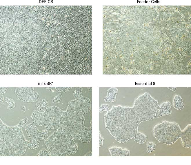 Human iPS cells grown in the Cellartis DEF-CS Culture System look different from those grown with traditional aggregate culture techniques