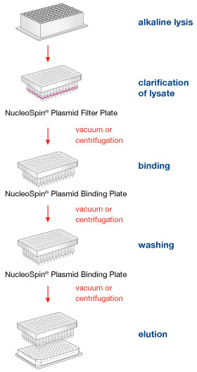 The NucleoSpin Plasmid 96 Transfection-grade procedure