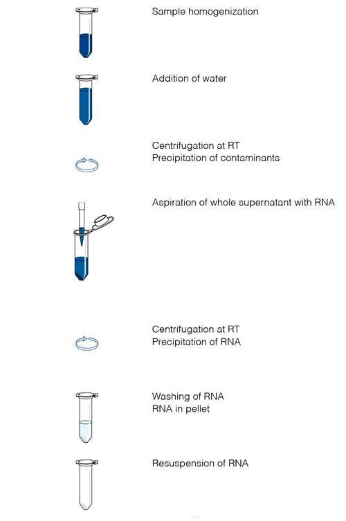 The NucleoZOL RNA isolation procedure