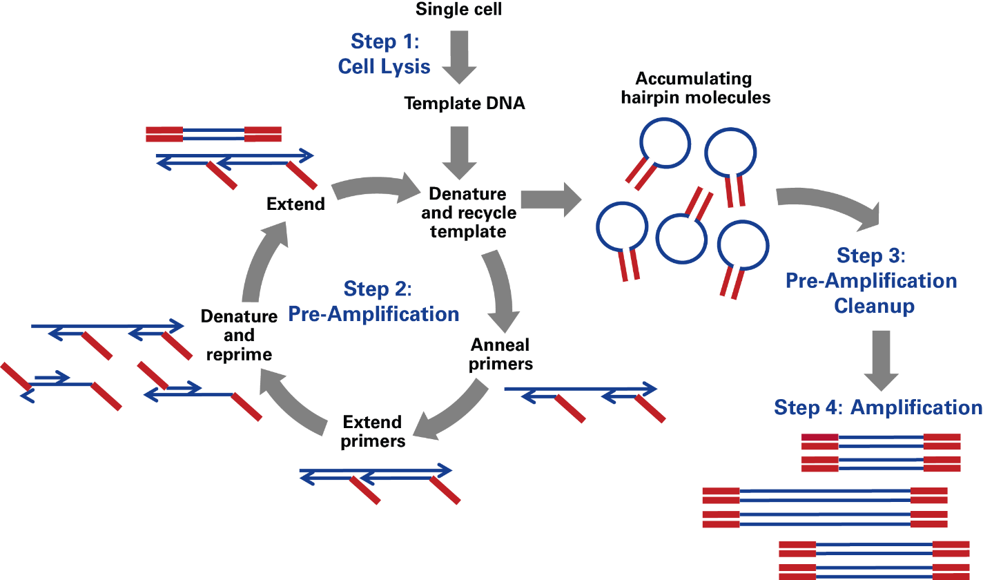 SMARTer PicoPLEX Gold Single Cell DNA-Seq technology: a four-step reaction that starts with a single cell