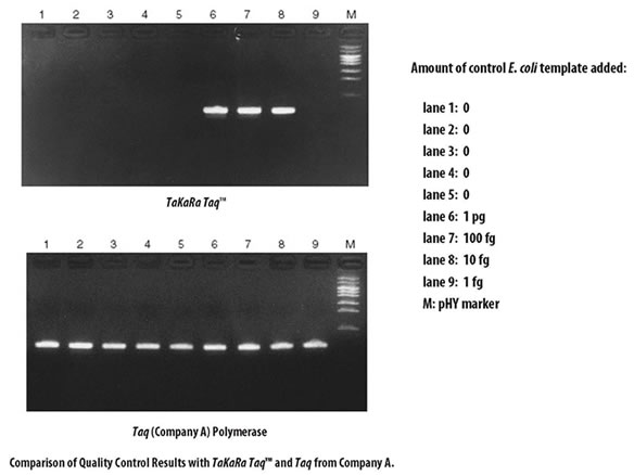 Quality control results for Takara Taq DNA Polymerase and a Taq enzyme from Company A