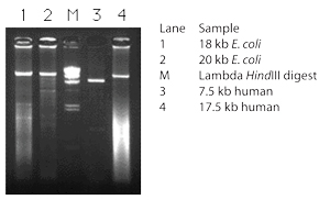 Amplification of long products using TaKaRa Z-Taq DNA Polymerase