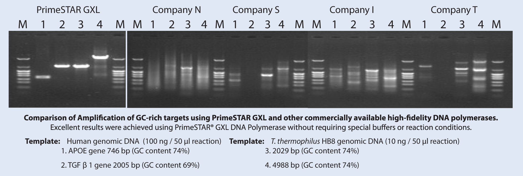 Examples of product yield on GC-rich templates: comparison of PrimeSTAR GXL DNA Polymerase with four other commercially available high-fidelity DNA polymerases