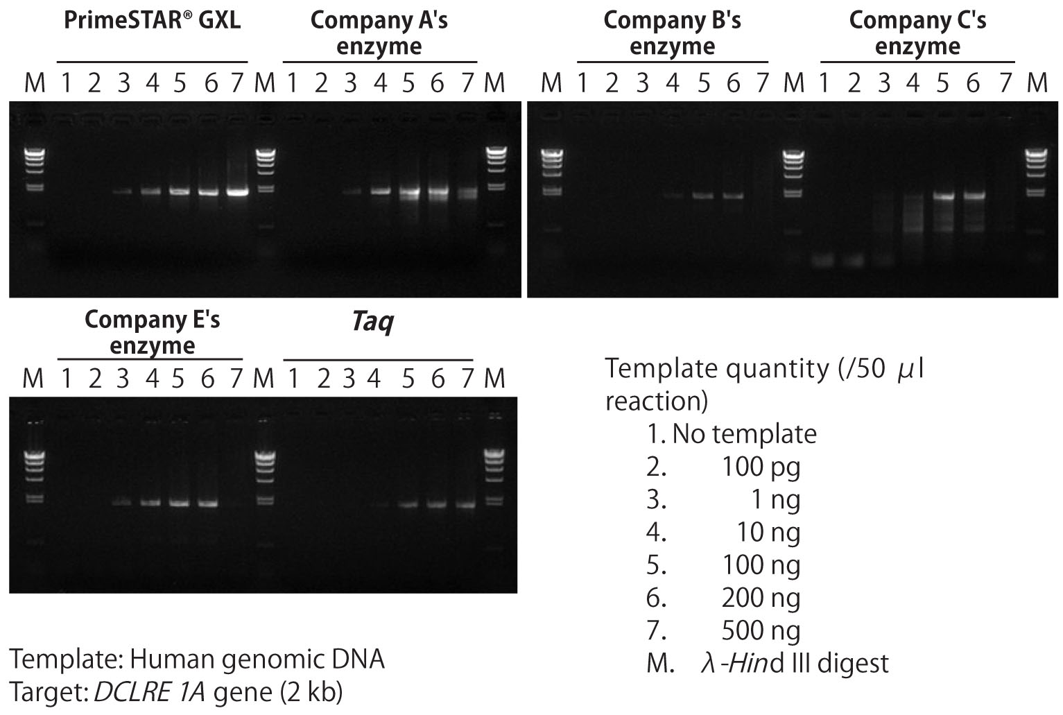 PrimeSTAR GXL DNA Polymerase shows efficient amplification in reaction mixes with a wide range of template quantity, including high levels of template that inhibit the activity of other commercially available high fidelity DNA polymerases