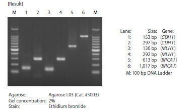 PCR with bisulfite-treated HeLa genomic DNA as template