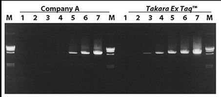 The amplification efficiencies of TaKaRa Ex Taq HS DNA Polymerase and a high-grade hot start PCR enzyme from Company A were compared