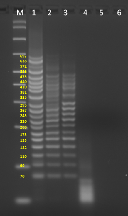 Successful amplification of 20-plex PCR with a short PCR cycle time using SuperPlex Premix, but not other multiplex master mixes