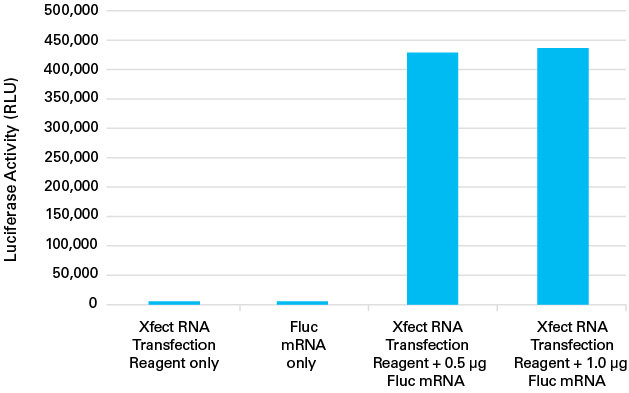 Xfect MicroRNA Transfection Reagent successfully transfects firefly luciferase (Fluc) messenger RNA into HeLa cells