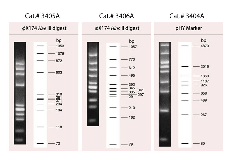 Migration patterns of pHY Marker DNA Ladder (Cat.# 3404A), PhiX174-Hae III Digest DNA Ladder (Cat.# 3405A), and PhiX174-Hinc II Digest DNA Ladder (Cat.# 3406A).