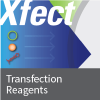 Protein transfection reagents