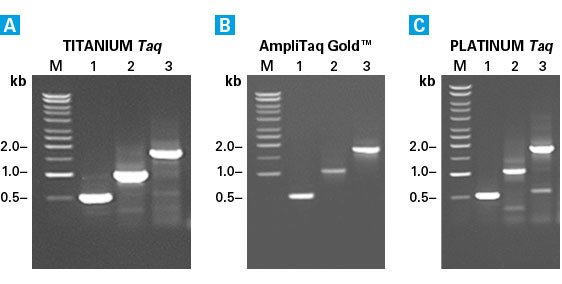 Titanium Taq efficiently amplifies specific genes from genomic DNA