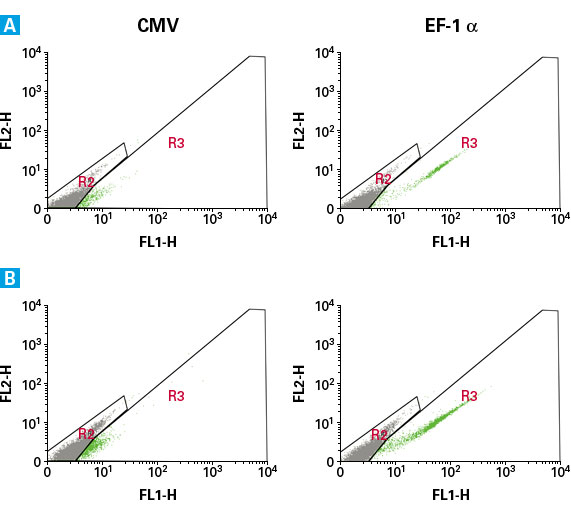 Expression of AcGFP1 driven by the EF-1 alpha promoter in stem cell lines is higher than expression driven by the CMV promoter