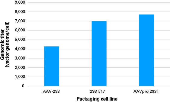 The AAVpro 293T Cell Line produces high titers of adenoassociated virus (AAV)