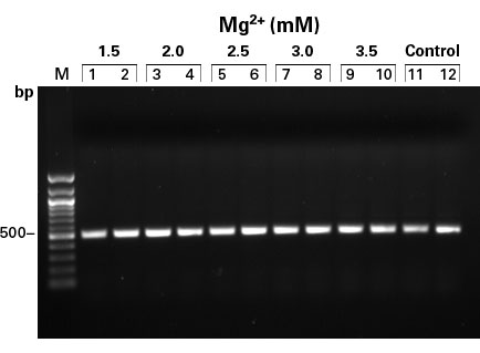 TITANIUM Taq is active over a wide range of Mg2+ concentrations