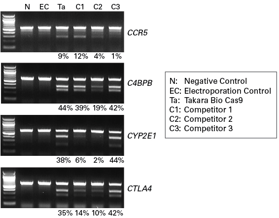 Gene knockouts in the Cellartis hiPSC-18 cell line